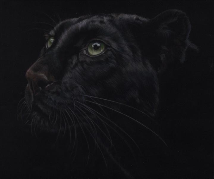 le grand chat noir