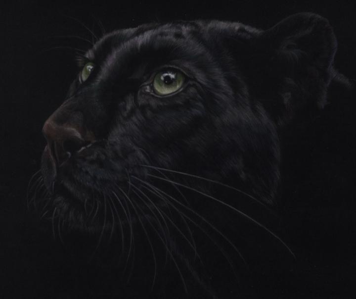 le grand chat noir for print